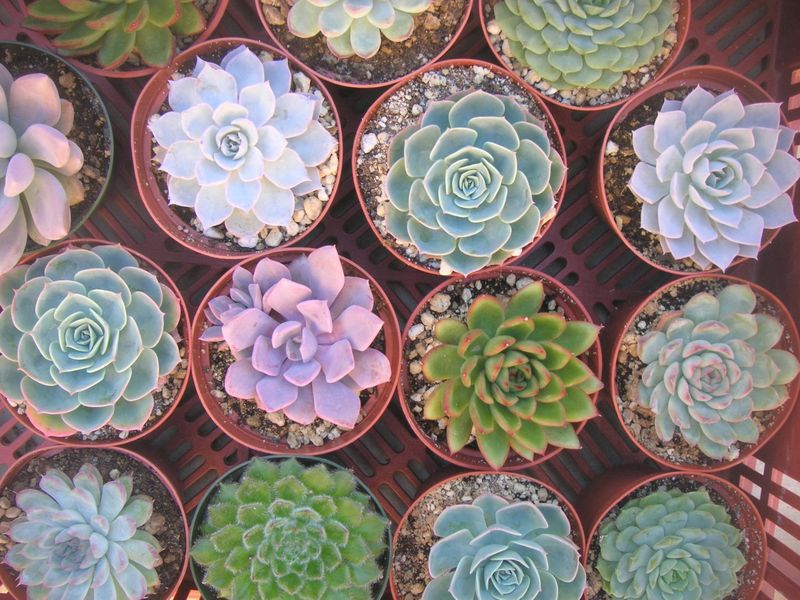 High society events succulents galore 1