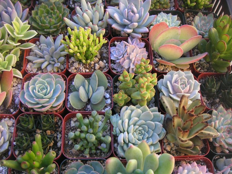 High society events succulents galore 6