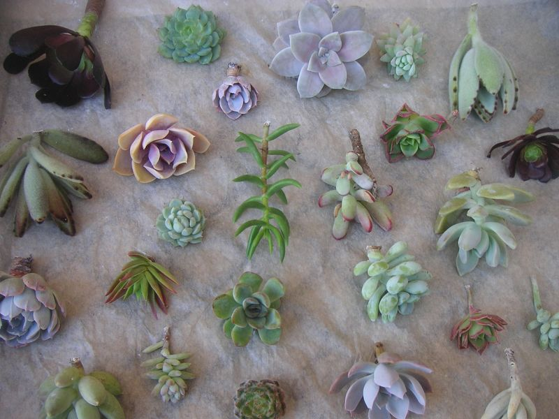 High society events succulents galore 10
