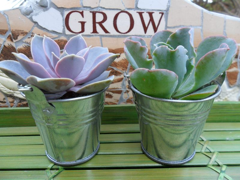 High society events succulents galore 13